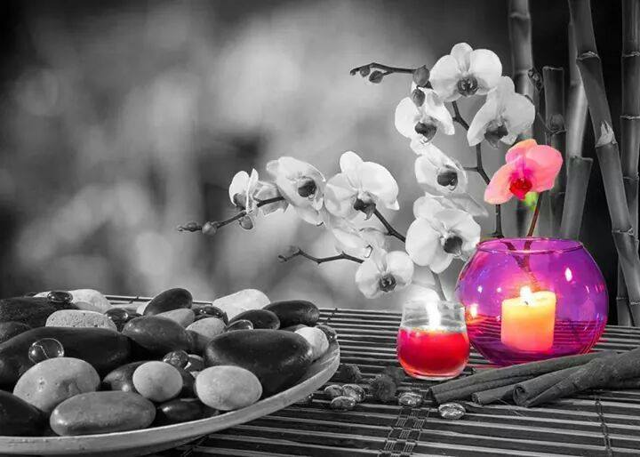 Résultat d'images pour Jolie orchidée blanche