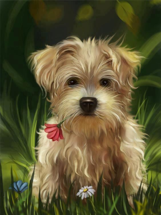 Joli dessin de chien - Dessiner un yorkshire ...